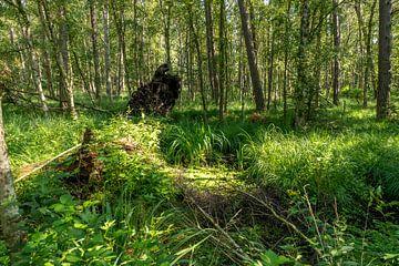 Deutsche Moor Waldlandschaft mit Farn, Gras und Laubbäumen im Sommer von Hans-Jürgen Janda