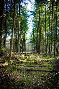 Groene doorkijk in het bos van Alex Hiemstra