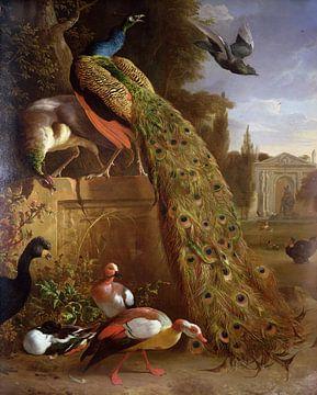 Pfau und Pfauen auf einem Sockel, mit Enten und anderen Vögeln in einem Park, Melchior d'Hondecoeter