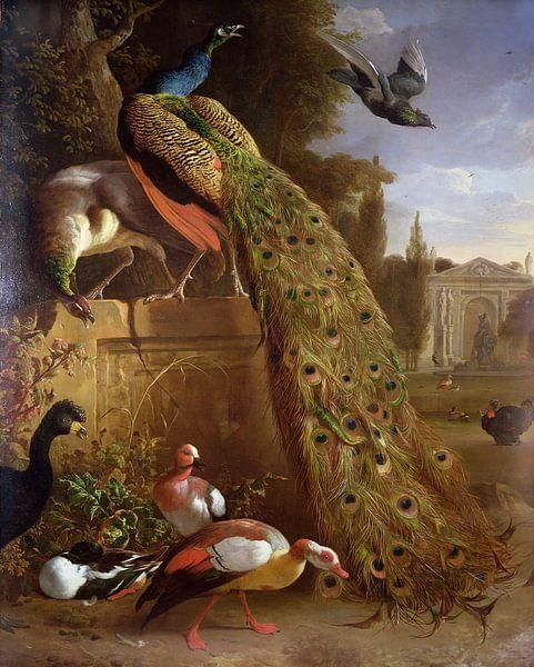 Pfau und Pfauen auf einem Sockel, mit Enten und anderen Vögeln in einem Park, Melchior d'Hondecoeter von Bridgeman Masters