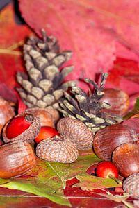 Arbores autumnales modus nucibus pineis oportebit, rosa coxis et hazelnuts