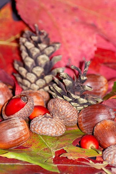 Arbores autumnales modus nucibus pineis oportebit, rosa coxis et hazelnuts van Michael Nägele