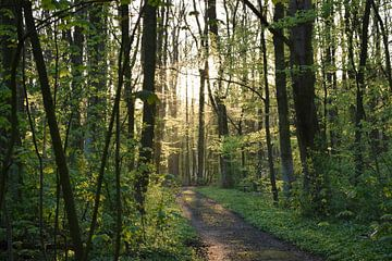 Licht door de bomen van Leanne van Iersel