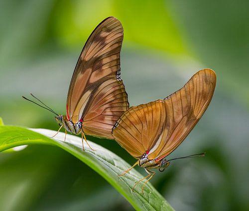 Vlinders in het groen van