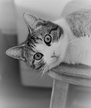 Kat op stoel von Stefan Muller