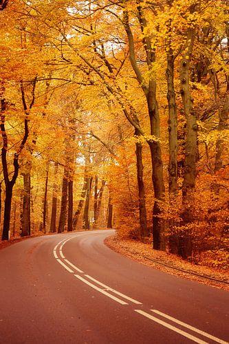 The Autumn Road...