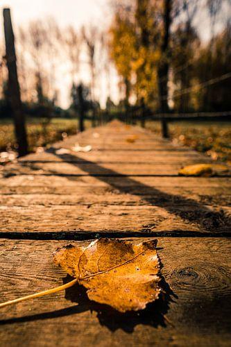 Herfst in het land van