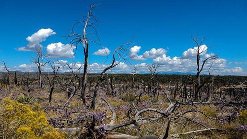 Mesa Verde National Park USA van