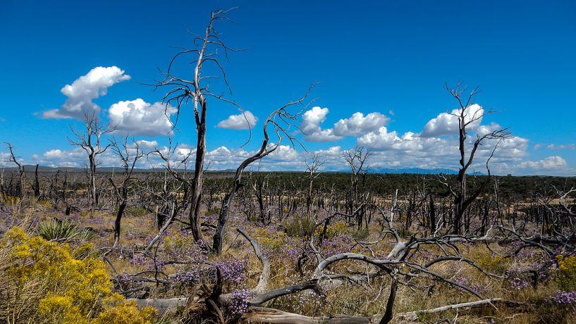 Mesa Verde National Park USA van Dimitri Verkuijl
