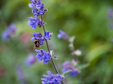 Op zoek naar nectar sur Martijn Wit