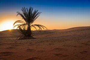 Eenzame palm in de woestijn bij zonsopkomst, Marokko van