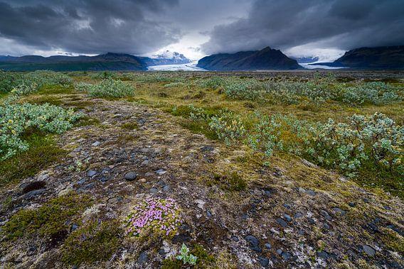 Vatnajökull nationaal park bij Skaftafell, IJsland