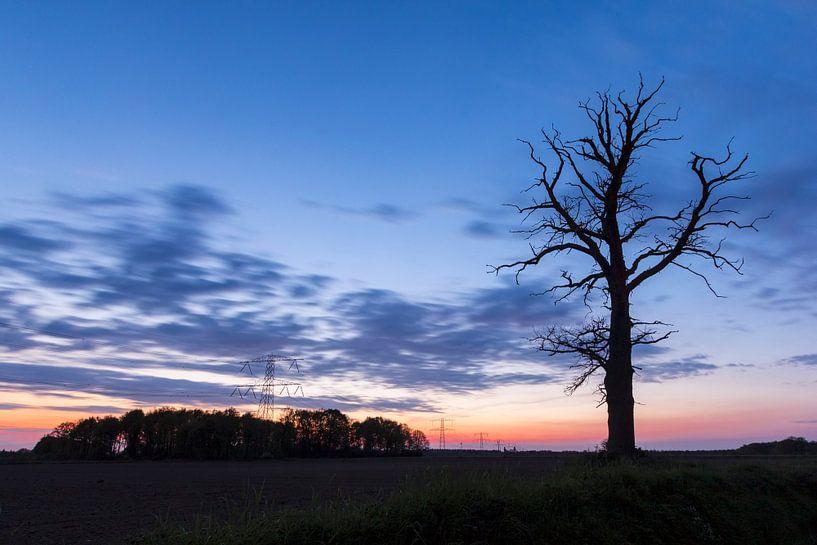 Boom in twilight van Sander Meertins