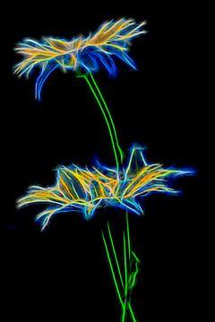 vurige bloem / fire flower van Dick Jeukens