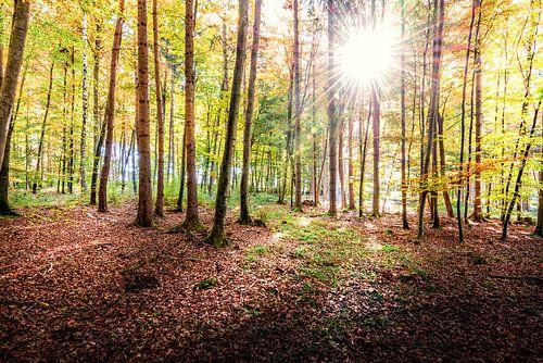 Morgens im Wald van Hannes Cmarits
