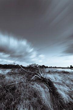 Strabrechtse Heide 296 von Deshamer