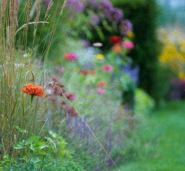Bloemenveld von Ingrid Ronde