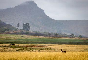 Prachtige landschappen in Zuid-Afrika. van Claudio Duarte