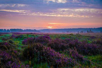 Heideveld van Peet de Rouw