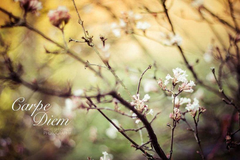 Carpe Diem Flowers van Hylke Greidanus