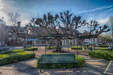 Moeierboom Etten-Leur centrum van Egon Zitter