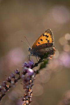 Kleiner Schmetterling im Moor von KB Design & Photography (Karen Brouwer)