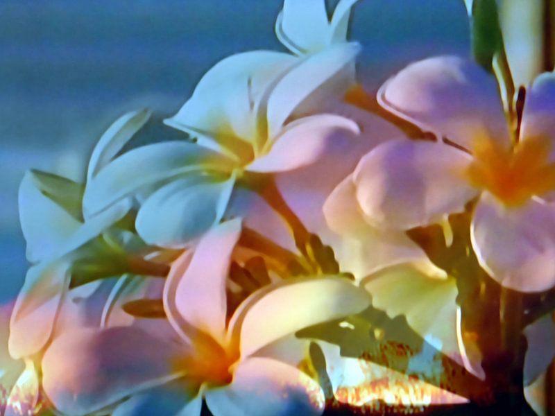 Abstrakte Blütenpracht van Peter Norden