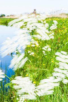 Fluitenkruid in de wind van Floris Kok