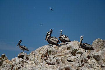 Pelikane auf Felsen von Anouk Duivenvoorden