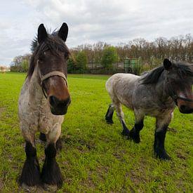 paarden in de wei van Brian Morgan