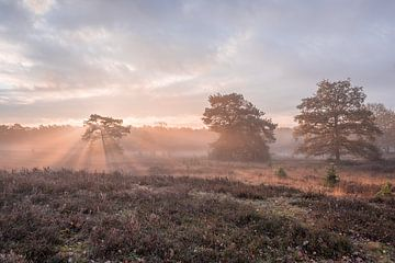 Ein schöner Wintermorgen auf der Brunssummerheide