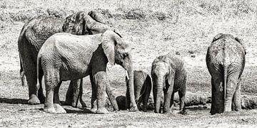Olifanten in Tarangire NP van Karin Mooren