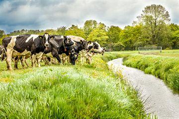 Kühe in der Waschmaschine von Fotografie-Linda