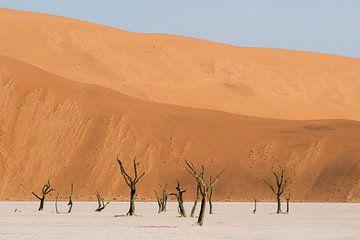 Deadvlei || Namibië, Sossusvlei