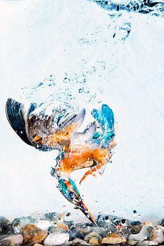 Eisvogel taucht unter Wasser von Jeroen Stel