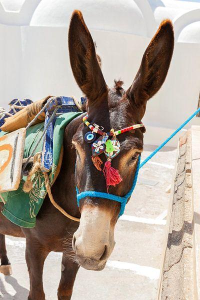 Esel mit bunter Kleidung auf der griechischen Insel Santorin, Griechenland. von Eyesmile Photography