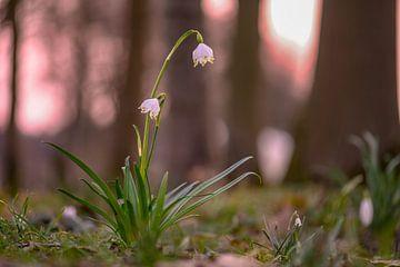 Blumen Teil 56 von Tania Perneel