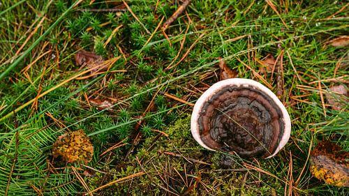 Paddenstoel in bos met mos in herfst