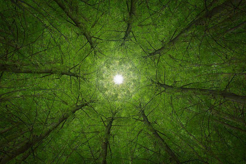 Mandala Trees (2) van Mark Scheper