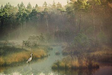 Prachtige grote witte reiger op een mooie mistige ochtend in de oisterwijkse vennen