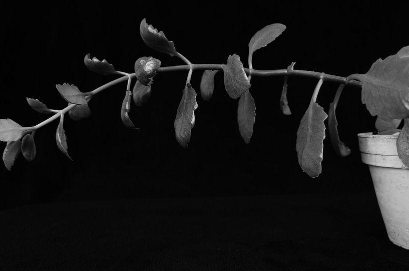 Ways to grow. von Tina Hartung