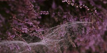 Spinnenweb op de heide 1 van Alie Ekkelenkamp