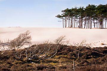 Sand dune van Nannie van der Wal