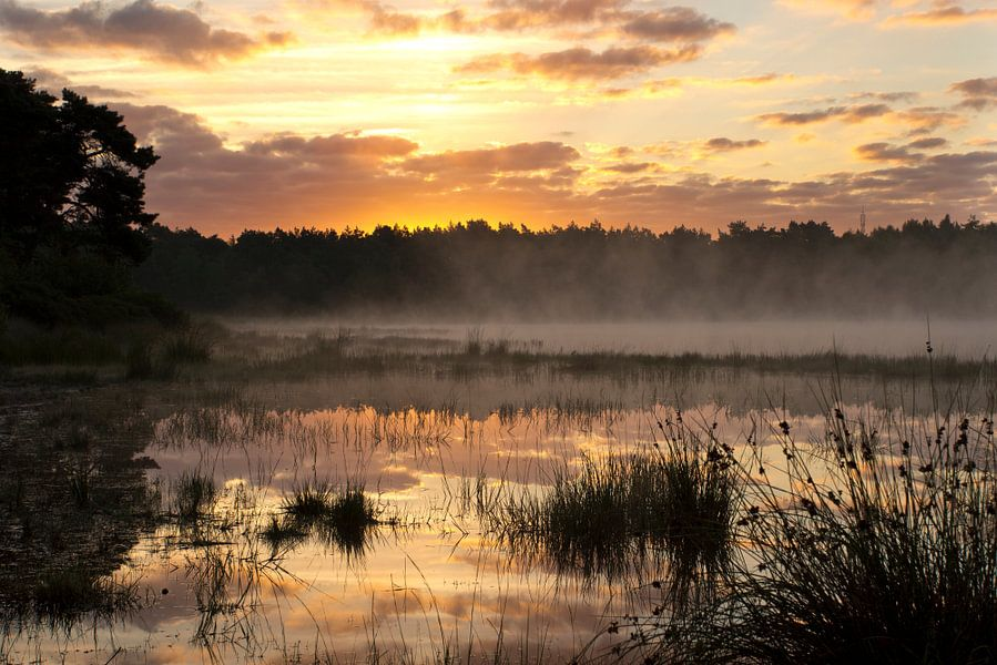 Landscape 'Morning mist'
