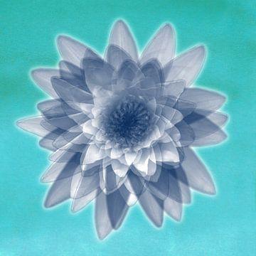 Lotusblumen in Blau von Bianca Wisseloo