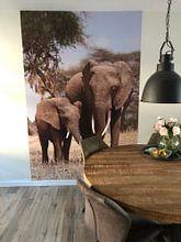 Klantfoto: Olifanten van Roos Vogelzang, op naadloos behang