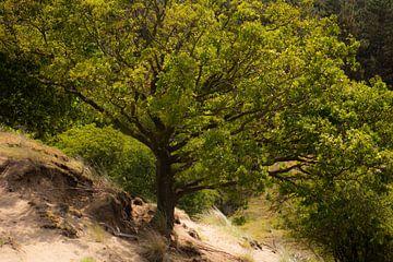 boom van Tania Perneel