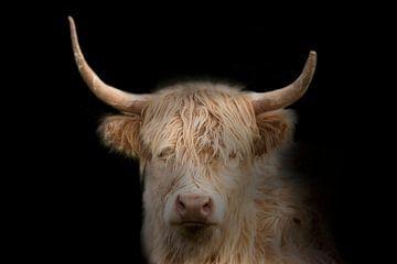 Schotse Highlander, een portret. van Gert Hilbink