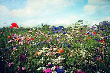 Blumenwiese sur Heike Hultsch