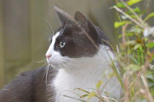 een nieuwsgierige kat ...